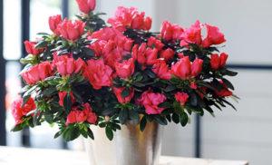 Bạn đã biết: Trồng hoa gì đón Tết là phù hợp nhất chưa?