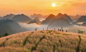Khám phá mùa hoa tam giác mạch Hà Giang