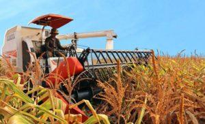 Giới thiệu về công ty cổ phần nông nghiệp quốc tế Hoàng Anh Gia Lai